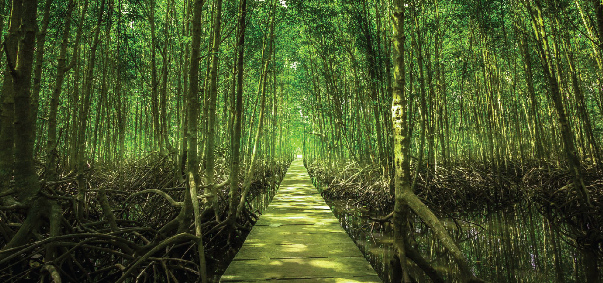 Discover the mangrove forest in Koh Kong