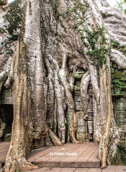 Ta Prohn Temple